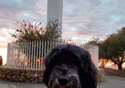 Grasberger _John 2020 12 24 - Torrey Portuguese Water Dog at the Cross